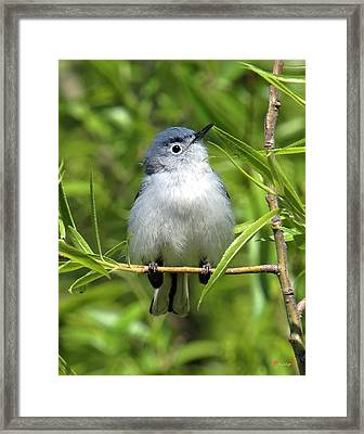 Framed Print featuring the photograph Blue-gray Gnatcatcher Dsb147 by Gerry Gantt