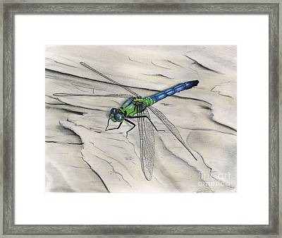 Blue-green Dragonfly Framed Print