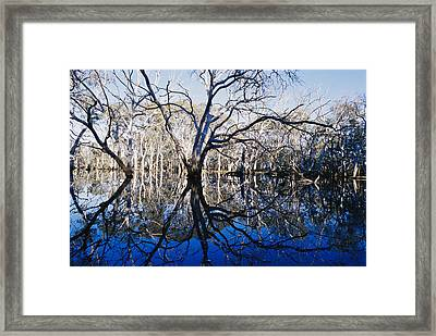 Blue Gum Trees And Reflections Framed Print