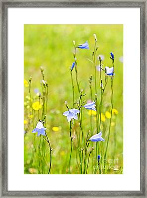 Blue Harebells Wildflowers Framed Print