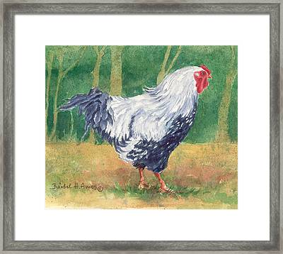Blue Hen  Framed Print