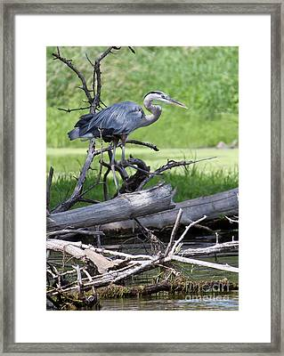 Blue Heron At The Lake Framed Print