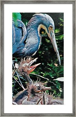 Blue Heron Family Framed Print by Lydia Holly
