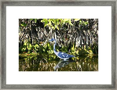 Framed Print featuring the photograph Blue Heron by Jeanne Andrews