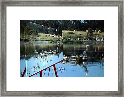 Blue Heron  Framed Print