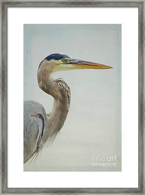 Blue Heron On Soft Texture Framed Print by Deborah Benoit
