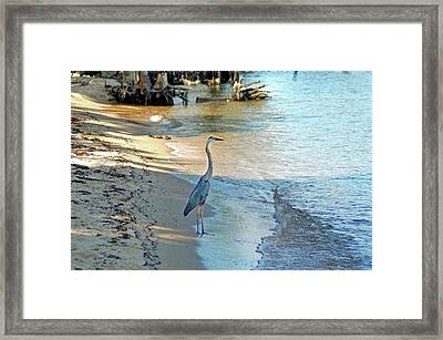 Blue Heron On The Beach Framed Print