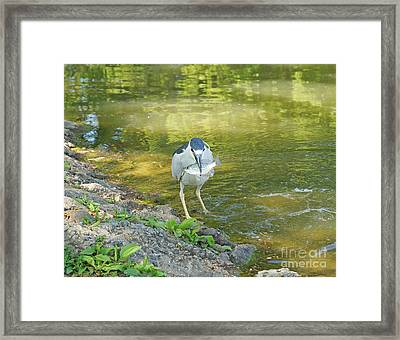 Blue Heron With Fish One Framed Print