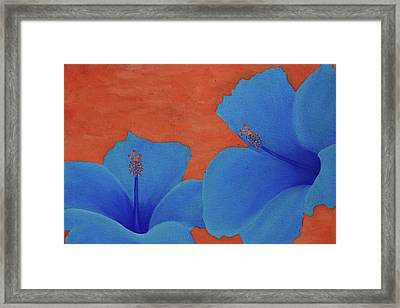 Blue Hibiscus Framed Print by Nick Flavin