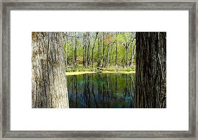 Blue Hole Springs Florida Framed Print by David Lee Thompson