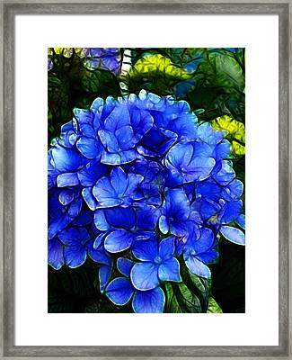Blue Hydrangea Abstract Framed Print by Cindy Wright