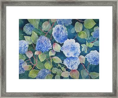 Blue Hydrangea Framed Print