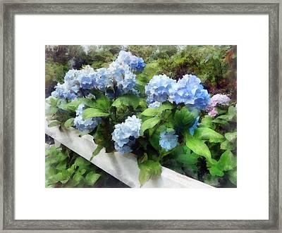 Blue Hydrangea On White Fence Framed Print by Susan Savad