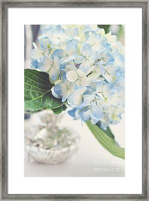 Blue Hydrangea Framed Print by Tamara Adams