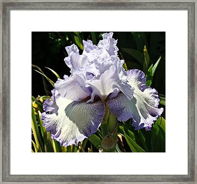Framed Print featuring the photograph Blue Iris by Nick Kloepping