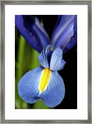 Blue Iris Wings Framed Print