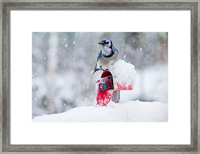 Blue Jay In Snow On Tiny Mailbox Framed Print