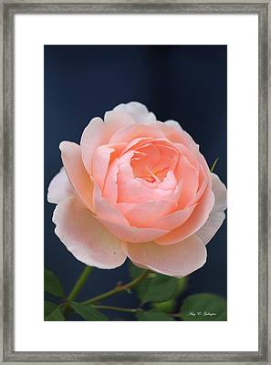 Blue Jeans Rose Framed Print