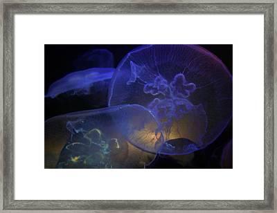 Blue Jelly Dream Framed Print