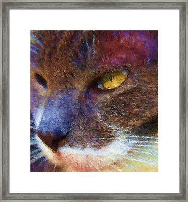 Blue Kitty Framed Print by Rachel Hames