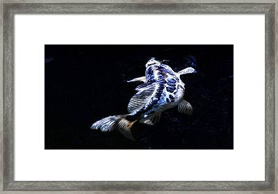 Blue Koi Surfacing Framed Print by Don Mann