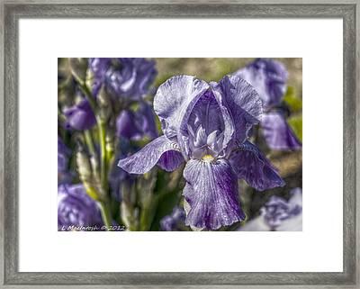 Blue Lady Framed Print by Lauren MacIntosh