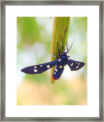 Blue Framed Print by LC  Linda Scott