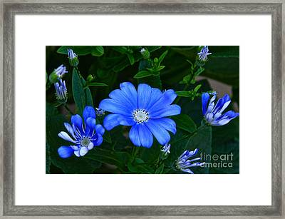 Blue Magic Framed Print by Byron Varvarigos