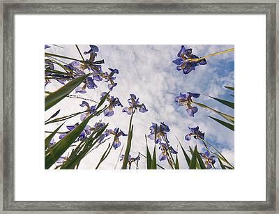 Blue Framed Print by Micael  Carlsson
