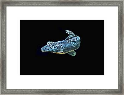 Blue Monster Framed Print