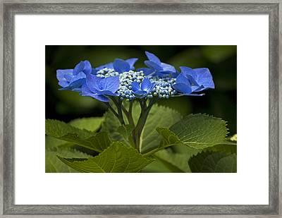 Blue Morning Framed Print by Elsa Marie Santoro