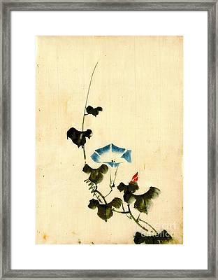Blue Morning Glory Vine 1840 Framed Print by Padre Art