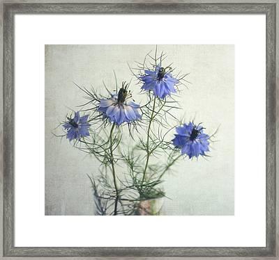 Blue Nigella Sativa Flowers Framed Print by By Julie Mcinnes