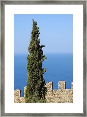 Blue Ocean And Sky Green Tree - Serene And Calming  Framed Print