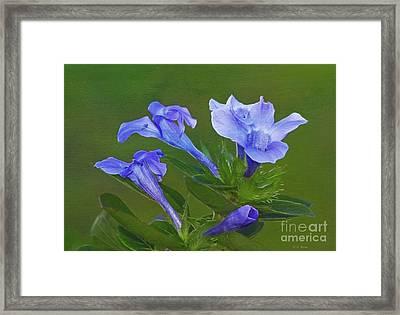 Blue On Green Framed Print