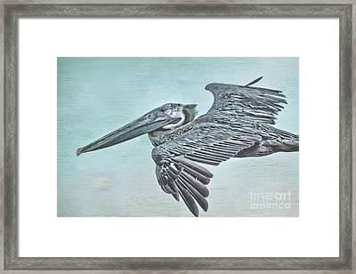 Blue Pelican Framed Print by Deborah Benoit