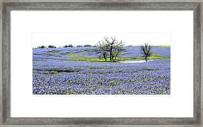Blue Pride Framed Print