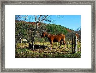 Blue Ridge Mountain Horses Framed Print