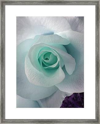 Blue Rose Framed Print by Robin Hewitt