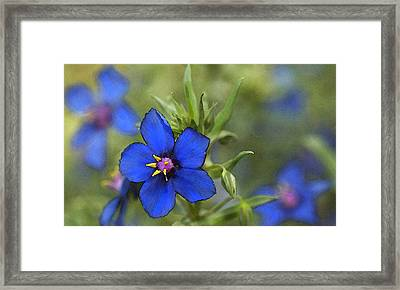 Blue Royalty Framed Print by Beverly Hanson