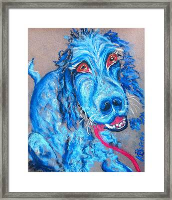 Blue Setter Framed Print