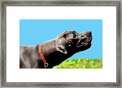 Blue Skies Ahead Framed Print by Dorrie Pelzer