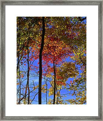 Blue Sky Autumn Framed Print