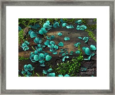 Blue Stain Framed Print