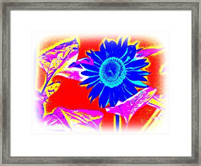 Blue Sunflower Framed Print by Pauli Hyvonen