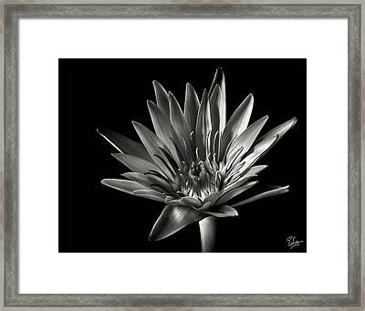 Blue Water Lily In Black And White Framed Print by Endre Balogh