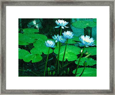 Blue Water Lily Framed Print by Design Windmill