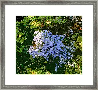 Blue Wild Flowers Framed Print by Mindy Newman