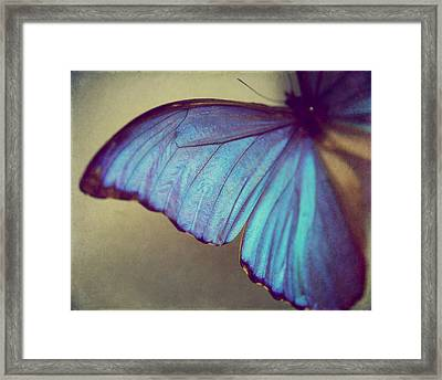 Blue Wing Framed Print by Amelia Matarazzo