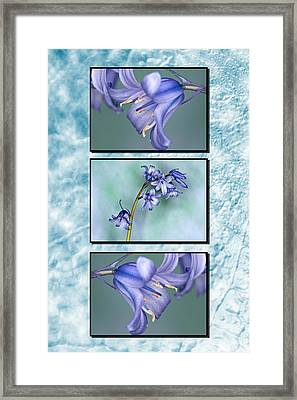 Framed Print featuring the photograph Bluebell Triptych by Steve Purnell